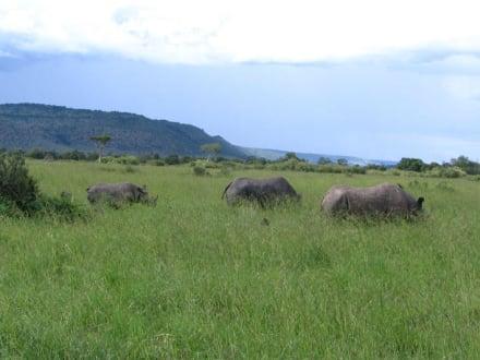 Nashornfamilie - Masai Mara Safari
