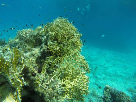 Riffe/Korallen - Schnorcheln Nabq Bay