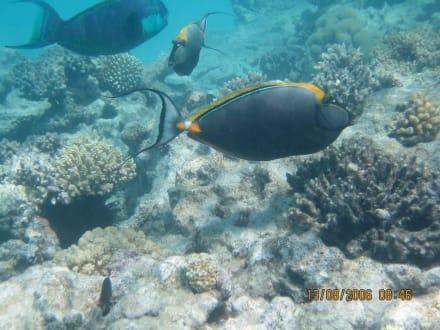 unterwasser - Giftun / Mahmya Inseln