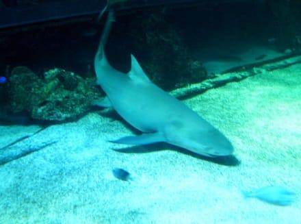 Sydney Aquarium - Sydney Aquarium