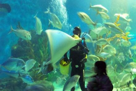 Fütterung im Aquarium - Melbourne Aquarium