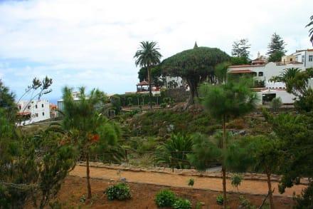 Drachenbaum von Icod de los Vinos - Parque del Drago