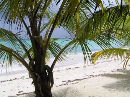 La Isla Saona - Dominikanische Republik - Isla Saona