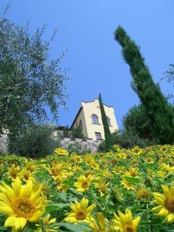 Die Gärten von Schloss Trauttmansdorff - Die Gärten von Schloss Trauttmansdorff