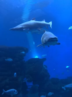 Haibecken - Palma Aquarium