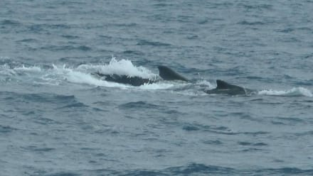 Whalewatching mit Markus - Guide Markus Frenzel Salvador da Bahia