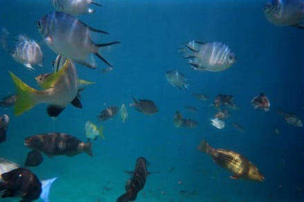 Unterwasserfotos - Schnorcheln Hurghada