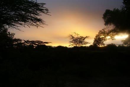 Sonnenaufgang in der Masai Mara - Masai Mara Safari