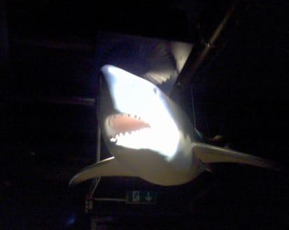 Aquarium Westerland - Aquarium Westerland