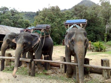 Freizeitpark - Elefantenreiten Phang Nga Elephant Park