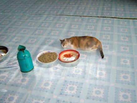 Ruhepause der Katzen - Tempel der springenden Katzen