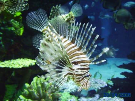 Fisch im Tropicarium - Tropicarium