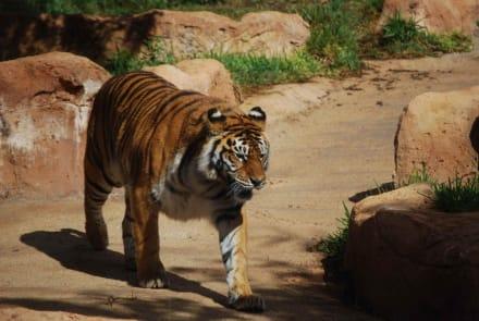 Kätzchen - Jungle Park Las Águilas