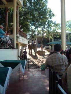 bad - Elefantenwaisenhaus Pinnawela