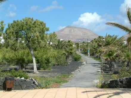 Palmengarten - Playa de Matagorda