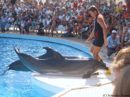 Delphinshow - Delfinarium Aqualand Antalya