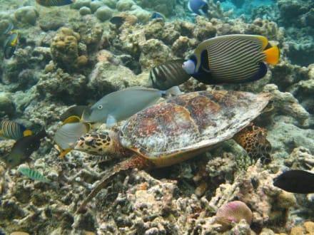 Turtle - Unterwasser