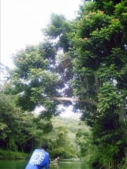Ausflug auf dem Great River  Jamaica - Bambusflossfahrt auf dem Great River