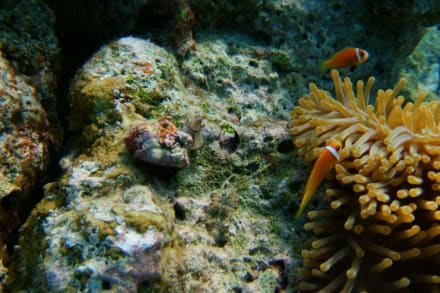Unterwasserwelt - Unterwasser