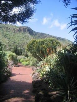 Grossartiger Botanischer Garten - Botanischer Garten Jardin Canario