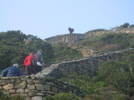Achtung Pavian - Kap der Guten Hoffnung
