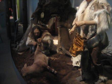 Leben in der steinzeit neanderthal museum