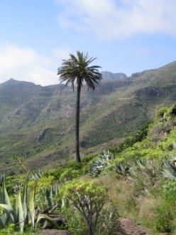 Tal von Benchijigua - Tal von Benchijigua