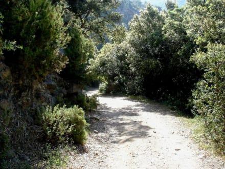 Die Korkeichenwälder von Sorède - Korkeichen des Roussillon