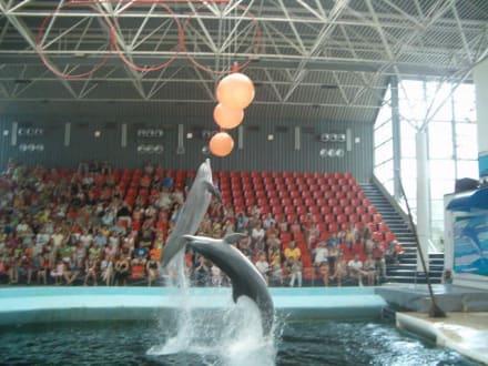 Delfinshow - Delfinarium Varna