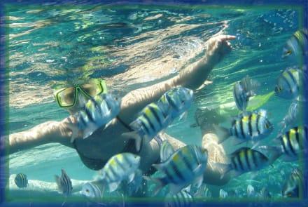 Tauchen in Ägypten Hauza Beach Resort - Tauchen Sharm el Sheikh