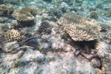 Schnorchlen Ägypten - Schnorcheln Hurghada