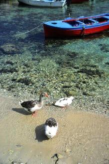 Lefokos Boote und Enten - Strand Lefkos