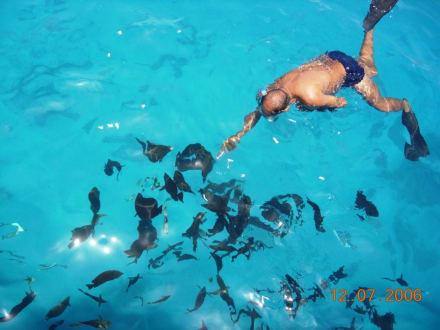 Fische füttern beim Schnorcheln - Schnorcheln Makadi Bay