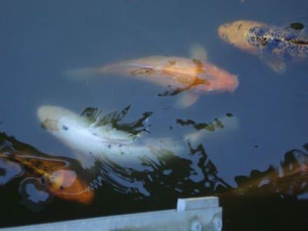 Fische - Tierwelt Herberstein