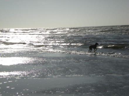 Auch Hunde lieben die Nordsee - Gosch Sylt