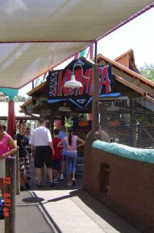 Achterbahn Busch Gardens - Busch Gardens