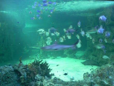 Panoramabecken im Sydney Aquarium - Sydney Aquarium