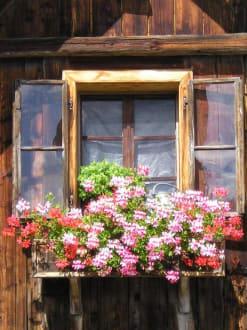 Blumenfenster auf der Halseralm - Halseralm