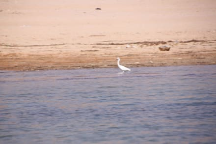 Ufer - Kreuzfahrt auf dem Nassersee