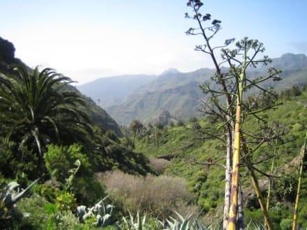 Das Tal von Benchijigua - Tal von Benchijigua
