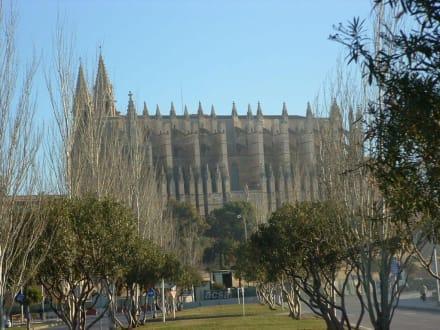 Palmas Kathedrale - Kathedrale La Seu