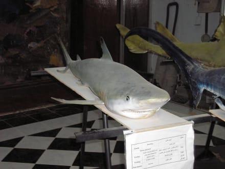 Verstaubter Hai - Aquarium