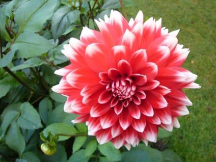 Blumenschau Britzer Garten 2008 - Britzer Garten
