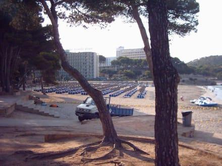 Am frühen Morgen - Strand Paguera/Peguera