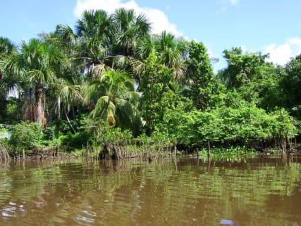 Auf dem Weg ins Camp - Orinoco Delta