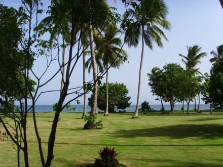 Gepflegte Rasenflächen auf der Insel - Bacardi Insel - Isla Cayo Levantado