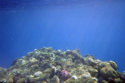 Wunderschöne Unterwasserwelt am Hausriff - Schnorcheln Sharm el Sheikh