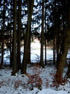 Rothenbügl liegt mitten im Wald - Rothenbügl