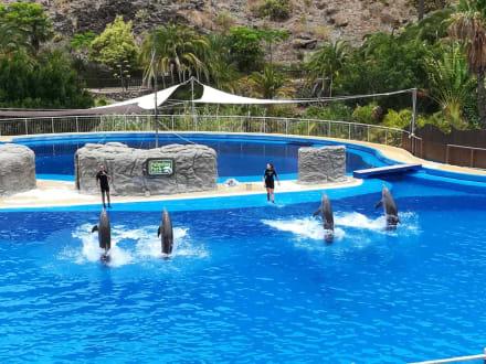 Delfinshow - Palmitos Park