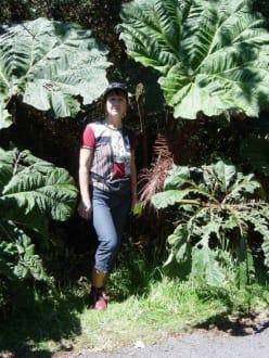 Somrilla de pobre - Nationalpark Vulkan Poas
